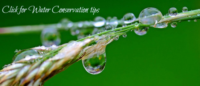 Conservation Tips